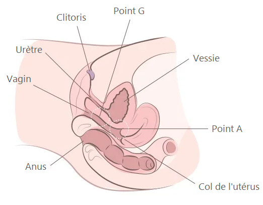 anatomie vagin point g se doigter 1